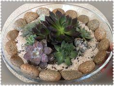 Succulent Dish Centerpiece w/ various Echeverias and Sempervivums