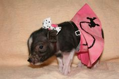 I will dress my pig in lots of clothes and we will match and take pictures and live happily ever after