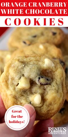Orange Cranberry White Chocolate Chip Cookies are buttery drop cookies full of sweet dried cranberries and pecans and flavored with fresh orange sugar. White Chocolate Cranberry Cookies, White Chocolate Chips, Buttery Chocolate Chip Cookies, Cranberry Dessert, Chocolate Cake, Cookie Flavors, Best Cookie Recipes, Gf Recipes, Drop Cookies