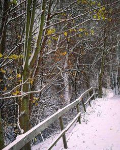 Snowy roads #helsinki #finland #trees #forest #helsinkitravel #travel #nature #snowwhite #picoftheday #pictures #photos #visithelsinki #myhelsinki #igtravel #tervetuloa # #suomi #visitfinland #visitscandinavia #igersfinland #photoofday #photooftheday #snowy