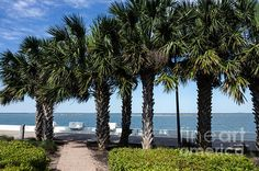Bench With A View by Debra Martz   http://debramartz.com/featured/bench-with-a-view-debra-martz.html
