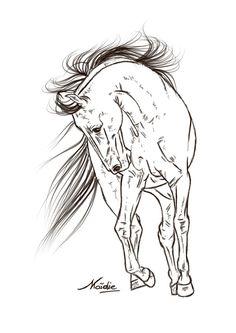 Clydesdale Stallion by AppleHunterdeviantart
