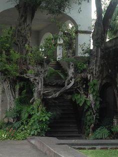 Hacienda Cocoyoc Hotel: Árbol trepador