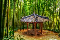Damyang Bamboo Forest 3 by Aaron Choi on 500px