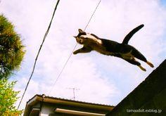 猫ジャンプ!空飛ぶネコの写真(Jumping cat・Flying cat )■鞆の浦野良猫散歩 : 【BlueNote】 鞆の浦+野良猫+風景写真と絵手紙/TOMONOURA■広島福山