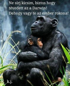 Chimpanzee family DIY Paint By Diamond Kit Wild Animals Photos, Animals And Pets, Baby Animals, Cute Animals, Primates, Blog Fotografia, Baby Kittens, Mundo Animal, Cute Animal Pictures
