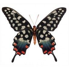 Zo leuk een vlinder aan de muur!