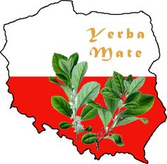 I had an interesting, and random, interview with a guy by the name of Sebastian. He's a Mate drinker from Poland and gave me some great information on how the drink ended up there. http://circleofdrink.com/how-poland-got-its-hands-on-yerba-mate/