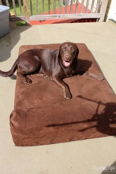 Big Barker Dog Bed Review (Video): Best Dog Beds for Big Dogs?
