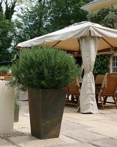 Made of natural slate they blend well with all kinds of foliage and natural colours The tall tapers can give height to design and help feature a plant