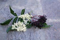 Holunderblüten und -früchte