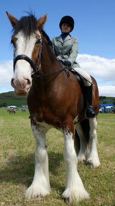Beautiful Clydesdale at the Alyth Agricultural Show. Clydesdales originated in the Clyde River Valley of Scotland and owe much of their heritage to the Great Horse of the Middle Ages.