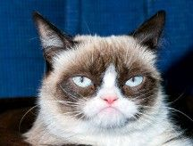 In other news... Grumpy Cat signs endorsement deal with Friskies (Purina) http://money.cnn.com/2013/09/18/news/companies/grumpy-cat-friskies/index.html
