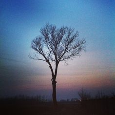 Still my favorite #tree. (presso Arconate)