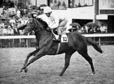 Sun Prince(1969)Princely Gift- Coasta Sola By Worden. 3x3 To Nearco, 4x5x5 To Blandford, 5x5x5 To Phalaris & Scapa Flow, 5x5 To Solario. 14 Starts 4 Wins 7 Thirds Won Queen Anne S(Eng-3), Prix Robert Papin(Fr-1), St James' Palace S(Eng-2), Coventry S(Eng-3), 3rd 2000 Guineas(Eng-1).