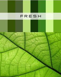 I LOVE green!!!! It's an obsession!