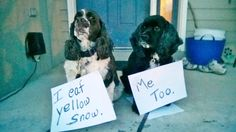 "Dog Shame | Johnny Ringo and Huckleberry confess. ""I eat..."