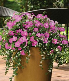 With two different species—Bacopa Snowtopia Improved and Petunia Shock Wave Pink Shade—in a single pellet, this combo produces a profusion of harmonizing color and foliage.