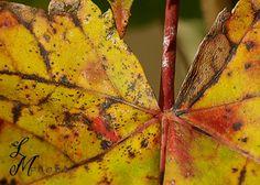 Wordless Wednesday Fall Foliage Edition by Liz Masoner