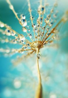 love the dew drops Macro Photography, Amazing Photography, Cool Photos, Beautiful Pictures, Pocket Full Of Sunshine, Tableau Design, Fotografia Macro, Dew Drops, Rain Drops