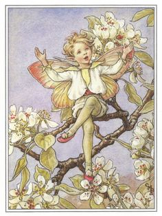 The Pear Blossom Fairy Cicely Mary Barker by OLDBOOKSMAPSPRINTS