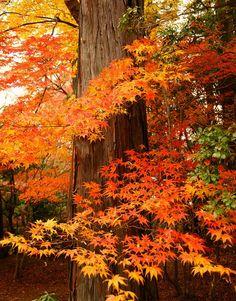 Autumn's loveliest