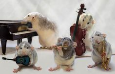 Rats Playing Musical Instruments - from a series of photos taken by photographer Ellen van Deelen featuring her rats Moppy and Witje with musical instruments.