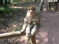 un petit tour à la montagne des singes en Alsace