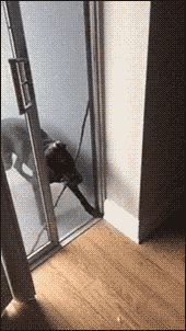 21 Best GIFs Of All Time Of The Week V115 from best GOAT and Best of the Web