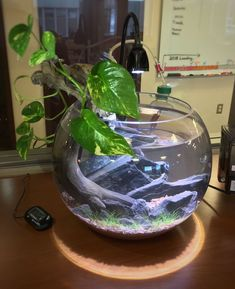 42 Amazing Aquarium Design Ideas Indoor Decorations There are hundreds of books written about fish keeping which are readily available, however there is not enough time to […] Nature Aquarium, Aquarium Fish, Indoor Water Garden, Indoor Plants, Amazing Aquariums, Betta Fish Tank, Aquarium Design, Paludarium, Fish Ponds