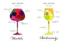 Wine anatomy: Merlot and Chardonnay - anazajapetrak.com