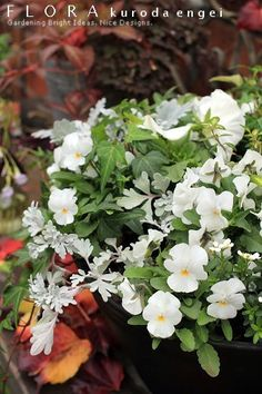 白いビオラの寄せ植え の画像|フローラのガーデニング・園芸作業日記