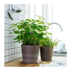 IKEA's Mandel series for pots of many sizes. So nice, natural and cheap! €2,90!
