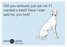 Free, Family Ecard: Did you seriously just ask me if I wanted a treat? Have I ever said no, you twit?