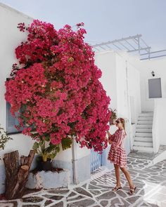 412 Likes, 11 Comments - Silia Greek Island Hopping, Bougainvillea, Paros, Greek Islands, Mykonos, Greece, Vienna, Pretty, Mood