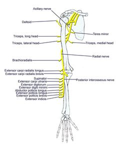 Foramen Lacerum...(Note: Vidian nerve/Nerve to pterygoid