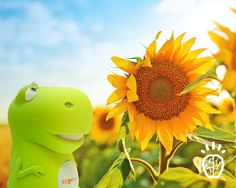 Here's a math problem with subtraction: There are 60 sunflowers in a field. If the Dino picked 7 to give away, how many flowers are left in the field?