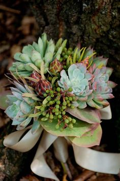 Succulent bouquet - would have loved this.