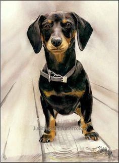 DACHSHUND SHORT HAIRED Judith Stein
