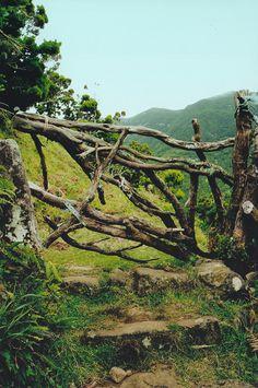 azores faial ~ mom sousa birthplace