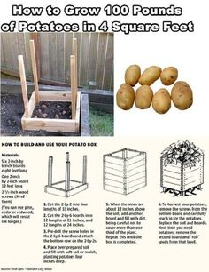 "Potatoes take many nutrients from the soil, if you re-use it, add the correct nutrients (i.e.:Miracle-Gro-VEGGIES) OR add used soil/straw to the compost heap for next yr. Can be grown in a burlap bag but must ALL be harvested at one time. Use Straw, untreated shavings, good dirt to fill in as spuds grow. CUT potatoes, leaving 2-3 eyes on each chunk; plant about 3"" intervals."