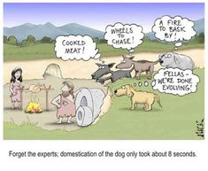 The dog-human connection in evolution Science Cartoons, Funny Cartoons, Evolution Cartoon, History Cartoon, Far Side Cartoons, Human Connection, Cartoon Dog, Stupid People, Funny Dogs