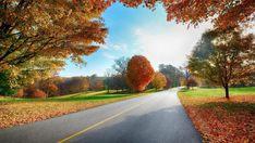 Download 1080p Nature Wallpaper Free.