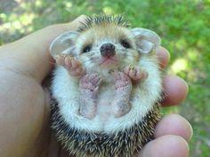 手の平サイズに胸キュン…動物の赤ちゃんたちの写真25枚:らばQ