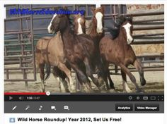 Breaking News, Sheldon Litigation Ended But Fight To Protect Wild Horses Not Over | Wild Horse Education
