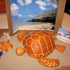 Turtle pumpkin.