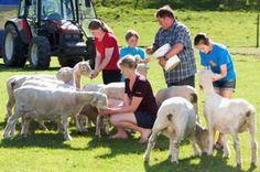 Agrodome Sheep Show and Farm Tour - TripAdvisor