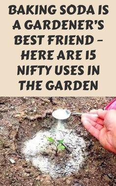 Vegetable Garden Planner, Veg Garden, Garden Pests, Garden Care, Lawn And Garden, Garden Compost, Gnome Garden, Garden Tools, Garden Yard Ideas