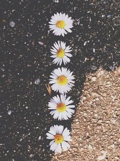tumblr flowers - Căutare Google