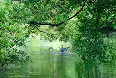 green  by cmlinea